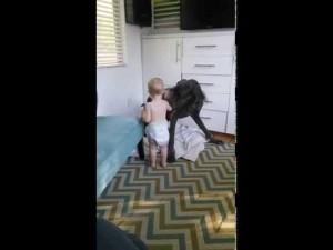 Un bébé pique la couverture d'un dogue allemand – YouTube