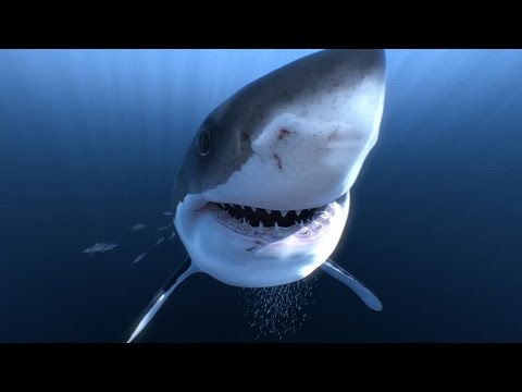 Face au grand requin blanc en vidéo 360° 4K!! – YouTube