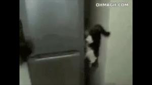 Chat en apesanteur