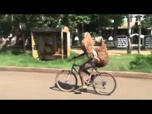 WTF Compilation    January 2016    MonthlyFails – YouTube